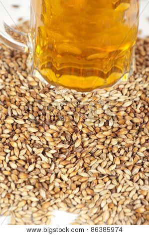 beer glass at malt grains on white background