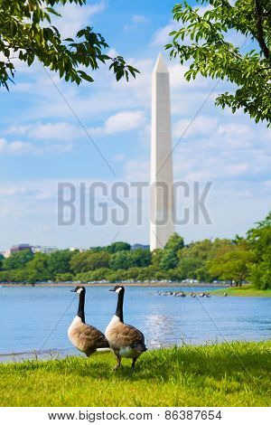 Washington Monument and Tidal Basin ducks District of Columbia USA