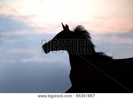 Silhouette Of A Beautiful Arabian Horse Against Sun Shining