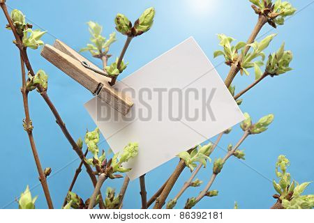 message written  white card hanging on green leafy branch by wooden clothes peg.
