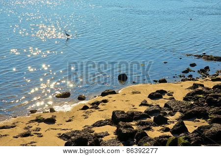 Egret on the shore of the river