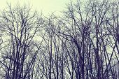image of scary  - Mysterious scary forest branches trees vintage toned colors - JPG