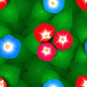 stock photo of ipomoea  - Seamless pattern with flowers ipomoea morning glory - JPG