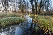 stock photo of wetland  - Beautiful morning landscape of wetlands. Wild rural landscape photographed on polish countryside.