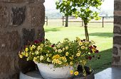 stock photo of manor  - detail of a flower pot outside a manor - JPG