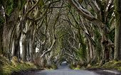 picture of ireland  - View on  the Dark Hedges in Northern Ireland - JPG