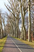 image of tree lined street  - Road through platanus tree alley in Berlin - JPG