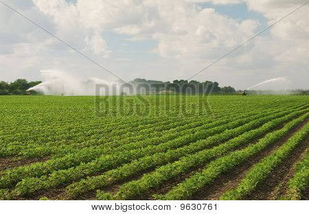 Fertile Field Irrigated