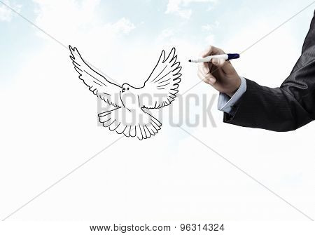 Close up of male hand darwing pigeon on white background
