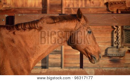 red horse portrait