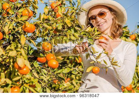 Caucasian girl harvesting mandarins and oranges in organic farm
