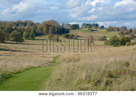 English Parkland Landscape