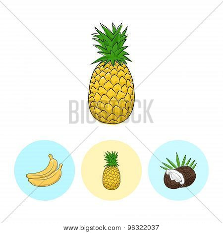 Fruit Icons, Pineapple ,banana,  Coconut