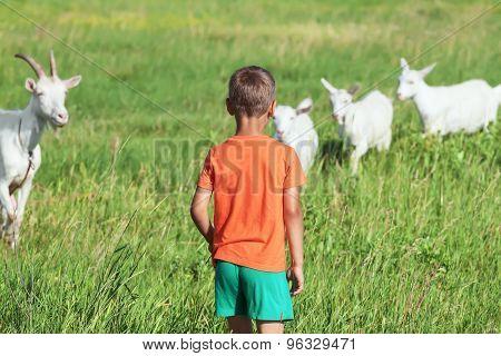 Boy looks like goats playing on  meadow.