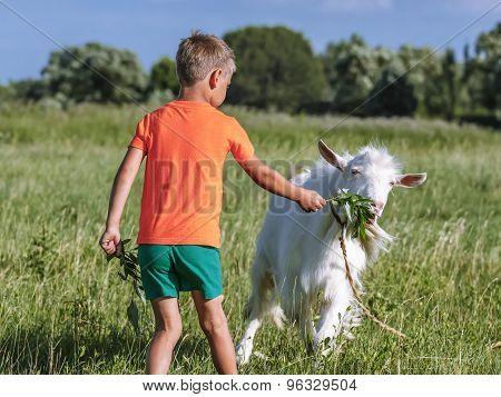Boy treats  goat sprig of willow.