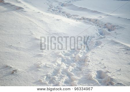 Footprints On Snowdrift