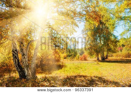 Beautiful Autumn Forest At Sunny Day.