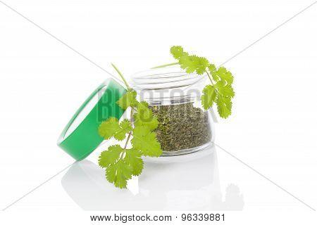 Coriander, Culinary Aromatic Herbs.
