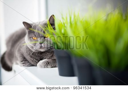 Cat Lying Behind The Pots With Grass