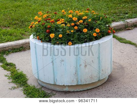 Orange Marigolds On A Bed Of Concrete. Flowers
