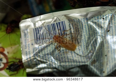 VIENNA, AUSTRIA - JUNE 7, 2015: Turkestan cockroach (Blatta lateralis) on a juice pack at Schonbrunn Zoo in Vienna, Austria.
