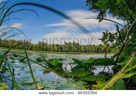 lake with water lilies pond nature landscape on the background o