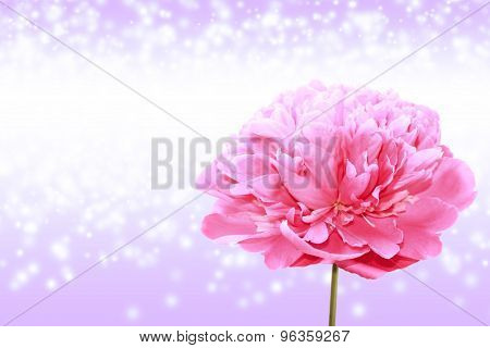 Bright Background With Large Flower