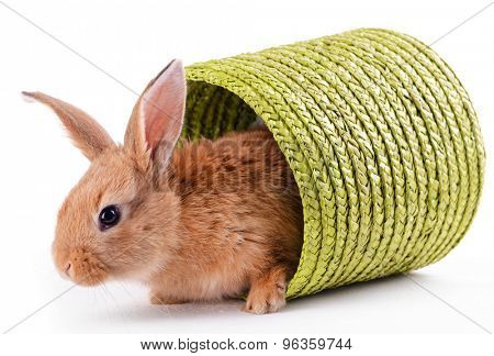 Little rabbit in wicker basket isolated on white