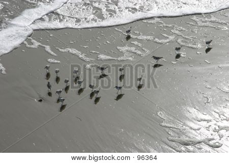Birds At The Shoreline