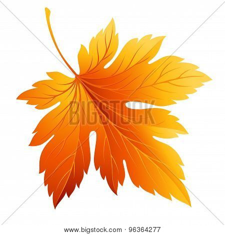 Fall leaf isolated in white. Vector illustration