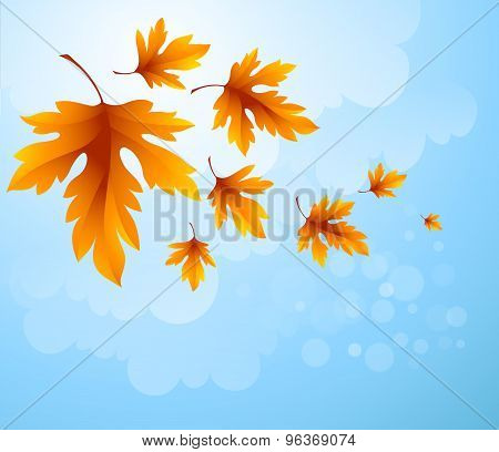 Autumn leaves  background of blue sky. Vector illustration