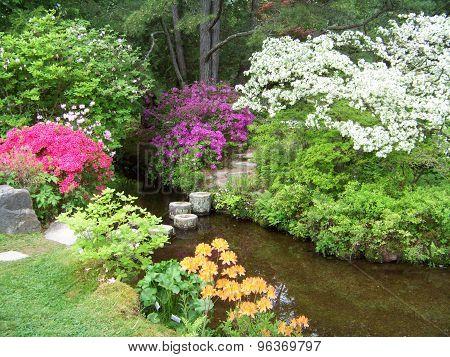 A Springtime Garden
