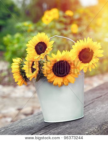 Sunflowers In Bucket Outdoors. Rustic Still Life.