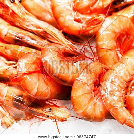 Tiger Shrimps As Gourmet Seafood Macro. Group Of Shrimp Cocktail Background Over White Ice
