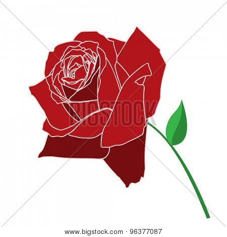 Red Rose Isolated on white background. Illustration