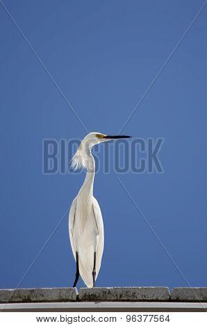 white snow egret on a background blue sky