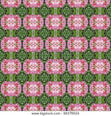 Wonderful Of Pentagram Flowers