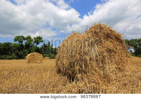 summer crop field with hay rolls under nice sky