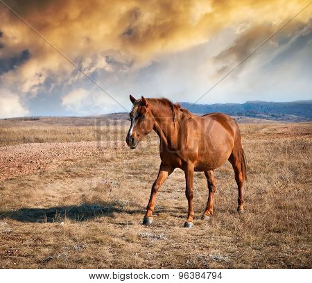 brown horse on a field against the mountains at sunset