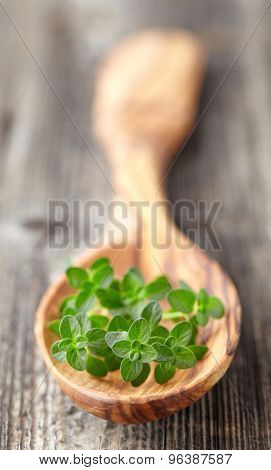 Fresh thyme in a wooden spoon
