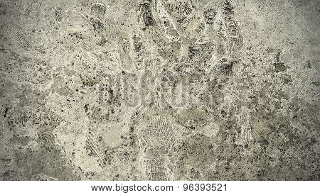Stone Texture With Fossils