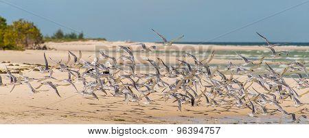 Flock Of Seabirds On The Beach