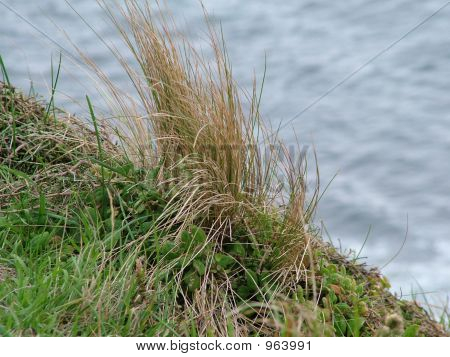 Wild Grasses Over Cliffedge