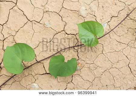 Dry Cracked Land And Green Leaves