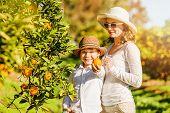 image of mandarin orange  - Smiling happy mother and son harvesting oranges and mandarins at citrus farm - JPG