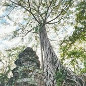 stock photo of raider  - Preah Khan famouse giant tree with ancient roots - JPG