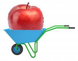 stock photo of hand-barrow  - Apple in hand - JPG