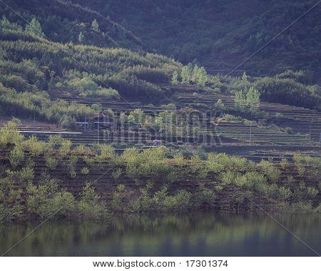 detalhes de paisagem