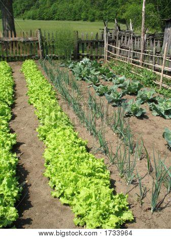 Southern Vegetable Garden