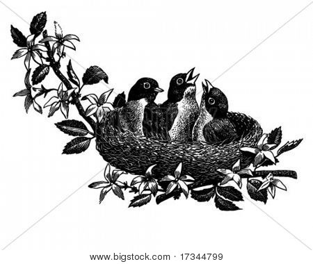 Baby Birds In Nest - Retro Clip Art